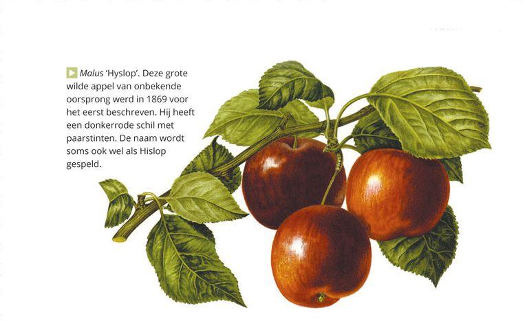 illustratie uit het boek 'Tuinmysteries' Beeld