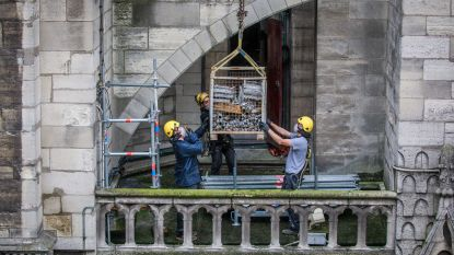 Geld is op: Notre-Dame ontslaat half jaar na brand groot deel personeel