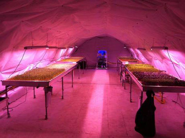 Hydrocultuur, LED-lichten en een natuurlijke constante temperatuur van 16 graden maken de ondergrondse moestuin mogelijk. Beeld Kos