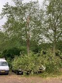 Angela uit Weezenhof attendeerde ons op dit opmerkelijk tafereel. De eigenaren van deze auto's zullen vandaag met alternatief vervoer op pad zijn gegaan.