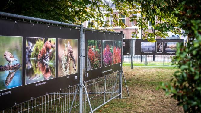 Honderd meter foto's in het park