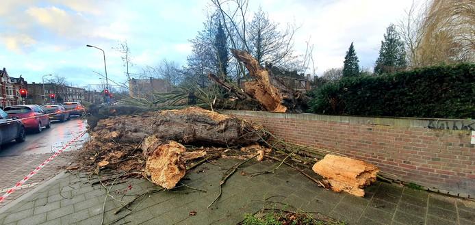 Een grote boom aan de Baronielaan, ter hoogte van de Markbrug bij de kruising met de Zuidelijke Rondweg, heeft het stormgeweld niet overleefd.