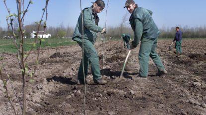 Natuurpunt en stad Aarschot laten Hagelands Bos groeien