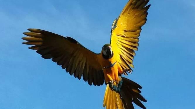 """Jager die papegaai Rambo doodschoot, riskeert 4.000 euro boete: """"Ik besefte niet dat die vogel een baasje had"""""""