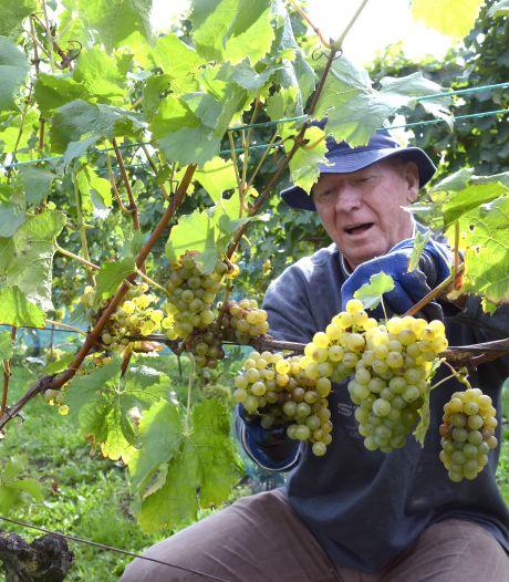 2018 uitzonderlijk goed druivenjaar in regio