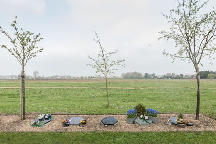 Naast de begraafplaats van Drongen werden 72 bomen aangeplant, waar nu een natuurbegraafplaats komt