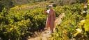Isabeau Sas van Our Daily Bottle in de wijngaard van haar vader in Zuid-Afrika.