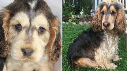 """Ondeugende 'Houdini' hond van anderhalf jaar oud ontsnapte al 270 keer: """"Elke dag minstens een keer"""""""
