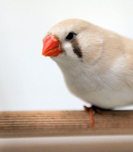 En dan zijn plotseling je vogels gestolen: 'Misschien was het wel een uit de hand gelopen burenruzie'