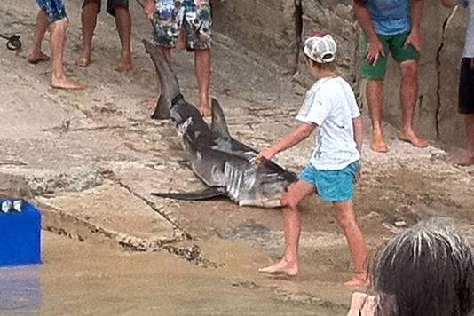 De jonge witte haai wordt een scheepshelling opgesleept waarna Justin Clark het dier met een metalen staaf de kop inslaat.