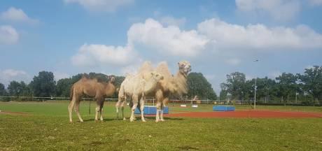 Het circus komt naar Rosmalen