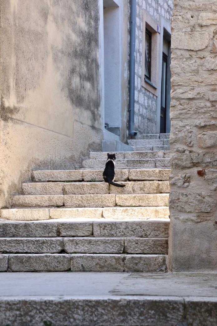 Weekwinnaar: in de prachtige straatjes en steegjes van Šibenik in Kroatië is het een kunst om aan de horde toeristen te ontkomen. Deze kat lukte dat. Adri van der Vliet was onder de indruk van die prestatie en zette hem op de foto.