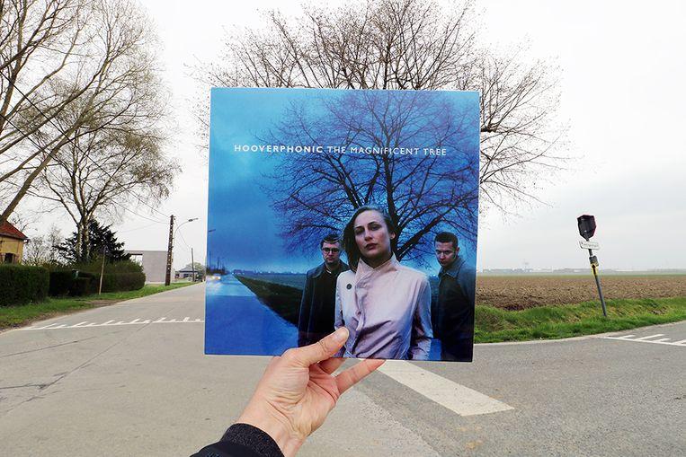 Hooverphonic vond deze boom in Kieldrecht het perfecte plaatje voor hun LP 'The Magnificent Tree' uit 2000.