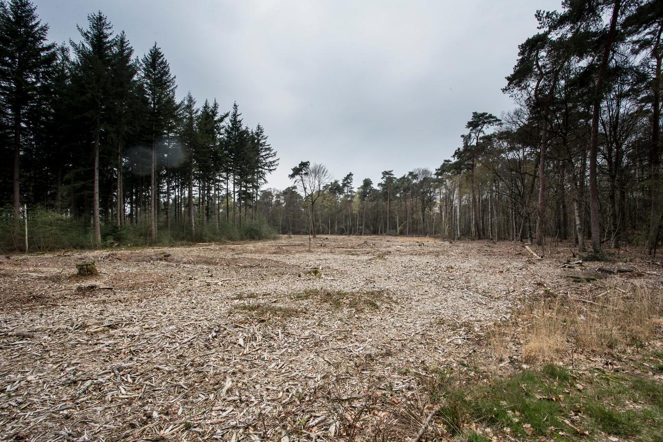 Een kapvlakte van 1 hectare groot bij een bos van Staatsbosbeheer in Ruurlo. Deze kap vond 3 jaar geleden plaats.