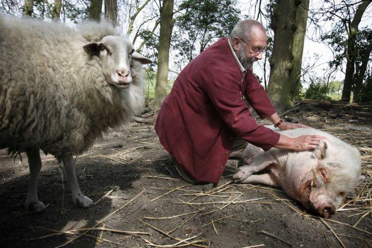 Hans Dorrestijn massert een varken in Amstelveen, april 2007. Foto ANP Beeld