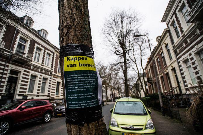 Omstreden bomenkap in de Parkstraat in Arnhem
