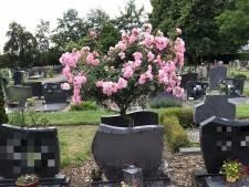 De uitbundige rozenstruik op het graf van Evert Jans vader in Voorst is gestolen, 'waarom?'