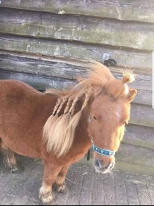 Pony Rico.