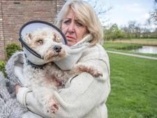 'Enge hond' kan preventief onderzocht worden in Zwolle op gevaar voor omgeving