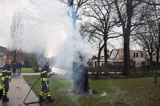 Boom door vuurwerk in brand in Etten-Leur. Foto  Alexander Vingerhoeds