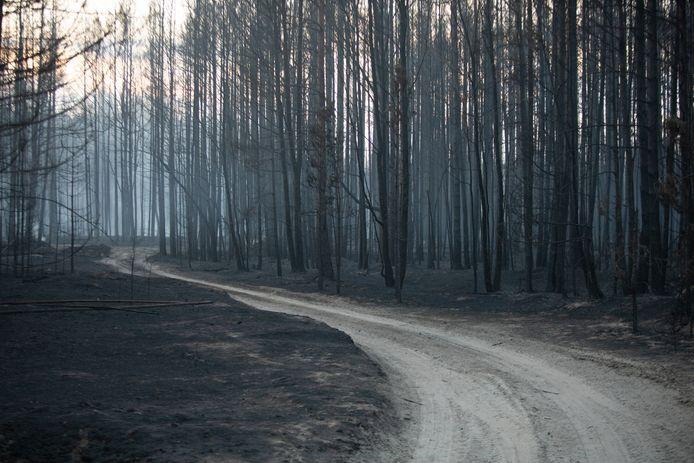 Een verkoold bos nabij het dorp Znamenka.