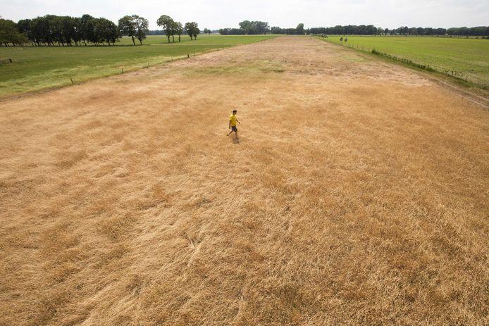 Een akkerbouwer bekijkt een perceel met verdroogd gras.