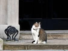 Bezorgde Britten: mag 'Chief Mouser' Larry the Cat blijven?