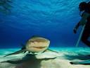 Haaien zijn Van Puymbroeck zijn specialiteit.