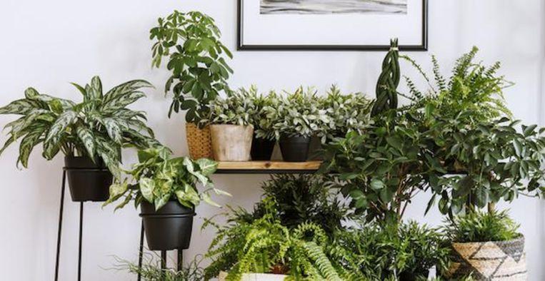 Zo herken je plantenziektes bij kamerplanten Beeld iStock