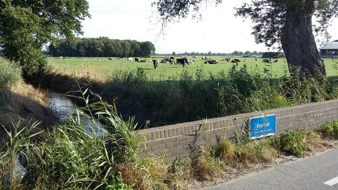 Koeien aan de Keersop in Bergeijk.