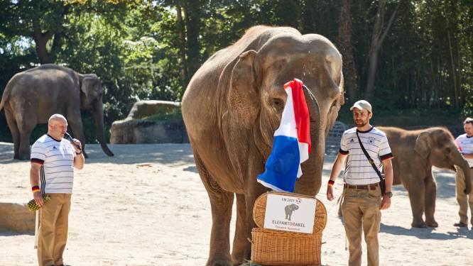 Na octopus Paul heeft Duitsland opnieuw een EK-orakel: een olifant