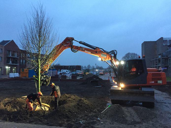 De plaatsing van de lindeboom in een plantsoen nabij het nieuwe winkelcentrum in Berkel-Enschot