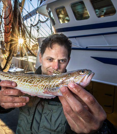Het Pietermannetje, een gevaarlijk steekvisje, mag vaker op het bord verschijnen