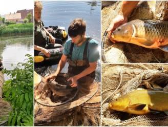 Onderzoekers brengen visbestand Grote Bassin in kaart voor 1.000-soortendag