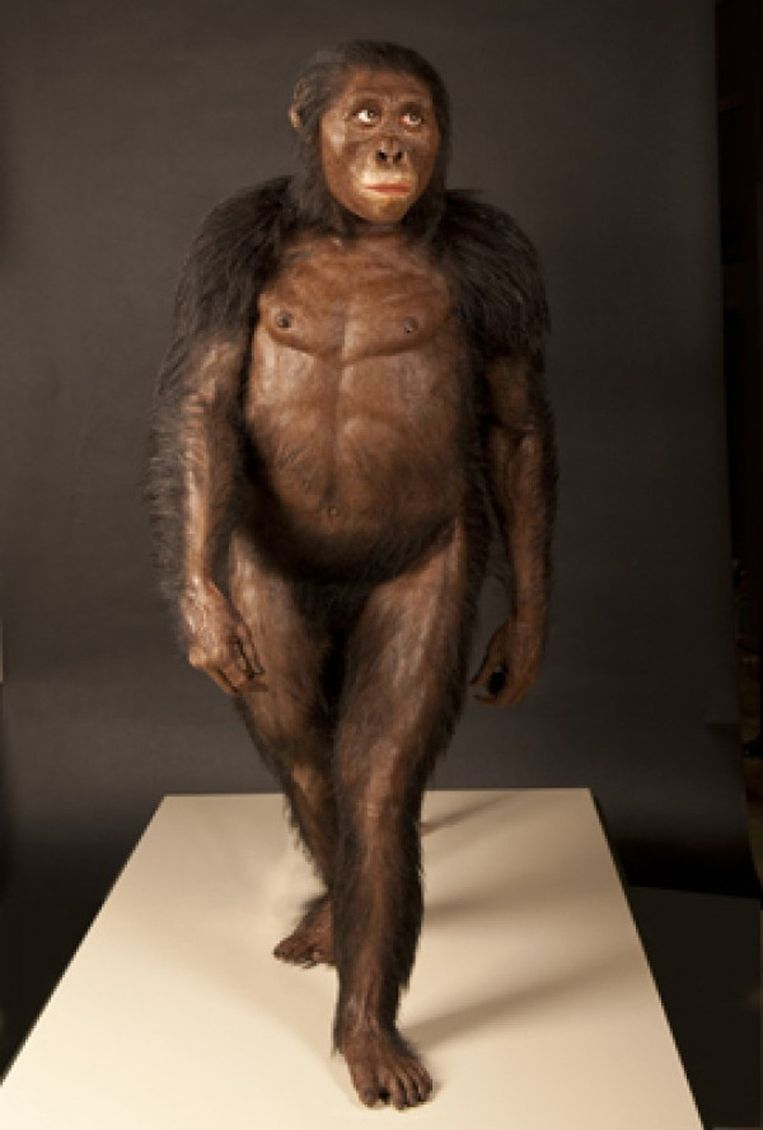 null Beeld The Cleveland Museum of Natural History