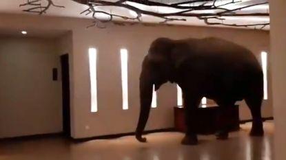 Olifant wandelt rustig door lobby van hotel in Sri Lanka