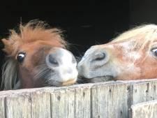 Pony's Edese kinderboerderij moeten aan het werk
