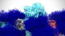 Wetenschappers van de Universiteit van Californië maakten een 3D-model van het coronavirus, waarop de suikerafzetting (donkerblauw) goed te zien is.