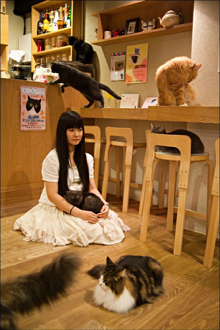 In de Japanse stad Osaka zijn al meer dan tien kattencafés waar klanten betalen om van het spinnende gezelschap te genieten. Beeld PHOTO_NEWS