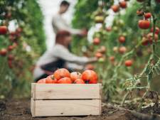 Groente en fruit uit Italië niet altijd zuivere koffie: 'Maffia heeft overal vinger in de pap'