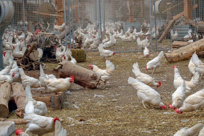 Fijnstof komt vooral voor rondom veehouderijen.
