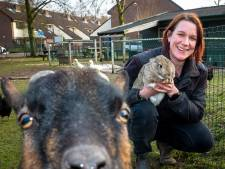 Donaties voor de Zutphense haan Gerrit en 'zijn dames' zijn hard nodig voor een dak boven hun hoofd