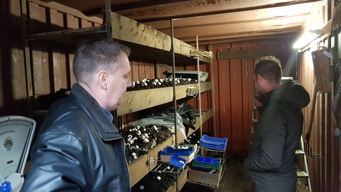 Marco Verhoeven (links) kweekte voor de expositie echte champignons in een zeecontainer