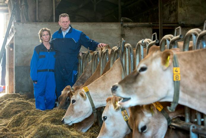 Tanja en Hans Nieuwenburg bij hun koeien.
