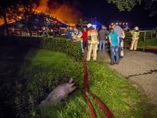 Varkenshouders willen na Agelo onderzoek naar stalbranden