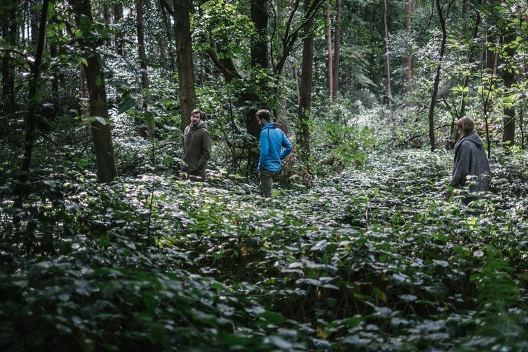 Eva, Thijs (m.) en Ben Jaspaert in het bos van hun kindertijd in Aarschot.  Beeld Wouter Van Vooren