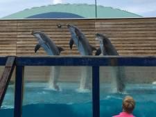 Dolfinarium stopt met houden van walrussen, acht dolfijnen verhuizen naar China