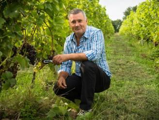 Ook deze vijf wijndomeinen uit onze regio moet je eens bezoeken