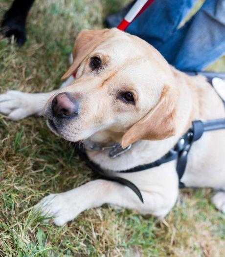 En Wallonie, les chiens d'assistance sont désormais les bienvenus dans les lieux publics