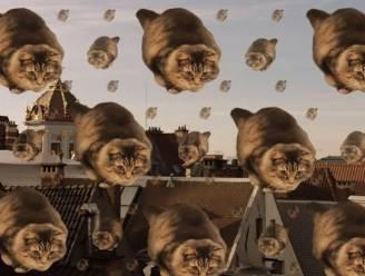 Kattenfilmpje moet Brussels toerisme boost geven